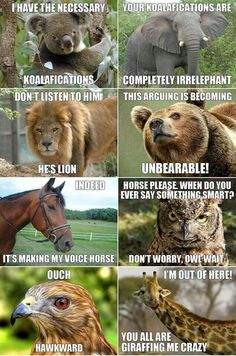 Koalafications. Ahahahaha animal puns in argument form!