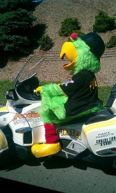 Go go go Pirate Parrot!!