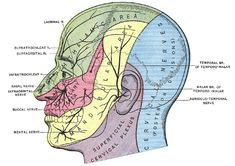 Dermatome Map Face | Tingling and Numbness in the Face and Back of the Head | Healthhype ...