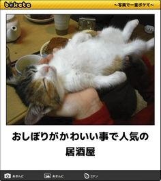 Kittens Cutest, Cats And Kittens, Cute Cats, Funny Cats, Animals And Pets, Baby Animals, Funny Animals, Cute Animals, Funny Images