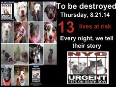 13 beautiful dogs are scheduled to die tomorrow through no fault  of their own. Please share their story everywhere to help give them a future they so deserving of. This is a VERY high kill facility so their time is short. To rescue a Death Row Dog, Please read this: http://urgentpetsondeathrow.org/must-read/ To view the full album, please click here:  https://www.facebook.com/media/set/?set=a.611290788883804.1073741851.152876678058553&type=3