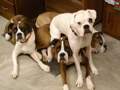 Stack-able boxers. Shirley's critters. They make me smile every time. Even when I had them all piled on my lap! Yes, all! LYMI Sissy Bestie!