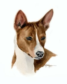BASENJI Dog Art Print Signed by Artist DJ Rogers by k9artgallery