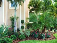 tropical front yard landscaping | Front Landscape & Pool Waterfall - tropical - landscape - tampa - by ...