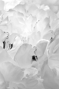 white ჱ ܓ ჱ ᴀ ρᴇᴀcᴇғυʟ ρᴀʀᴀᴅısᴇ ჱ ܓ ჱ ✿⊱╮ ♡ ❊ ** Buona giornata ** ❊ ~ ❤✿❤ ♫ ♥ X ღɱɧღ ❤ ~ Tue 20th Jan 2015