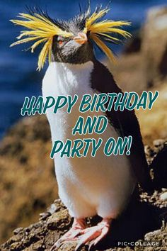 The Number Happy Birthday Meme Happy Bday Message, Happy Birthday Messages, Happy Birthday Images, Happy Birthday Greetings, Birthday Pictures, Birthday Card Sayings, Birthday Wishes Quotes, Birthday Memes, Birthday Ideas