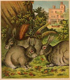 Large, colored book plate drawing of a trio of rabbits and acorns at the base of an oak tree. Ferns, a flower, a home and a horse and carriage are in it too.