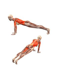 "DANDASANA Plank pose |                                                                                                                                                 <button class=""Button Module borderless hasText vaseButton"" type=""button"">       <span class=""buttonText"">                          More         </span>          </button>"