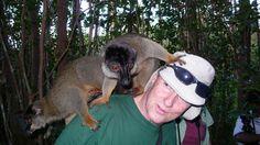 "Naturalist Brian Keating looks at the brand new ""Land of the Lemur"" exhibit at the Calgary Zoo. Interesting Animals, Madagascar, Lemurs, Calgary, Exhibit, Brown, Lemur, Brown Colors"