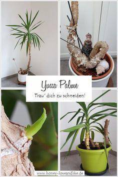 Yucca Palme vermehren! Trau dich sie zu schneiden! #Palme Plant Hanger, Garden Plants, Recycling, Decoration, Repurposing, Yard Ideas, Day Lilies, Hydrangeas, Ground Cover Plants