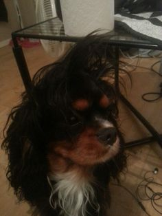 Bad hairday#1
