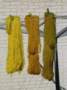 Aangestoken door de spinvriendinnen die vorige week zo mooi geverfd hadden met fluitekruid ben ik ook begonnen. Het staat nu overal... India Flint, Natural Dye Fabric, Textile Dyeing, Plant Painting, Textiles, How To Dye Fabric, Shibori, Wool, Nature