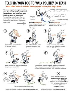 Doggie drawing – on positive reinforcement - Maltese Dogs Forum : Spoiled Maltese Forums