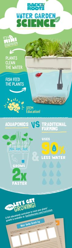 A self-cleaning hydroponic fish tank grows organic herbs and microgreens. WATER GARDEN aquaponic fish tank ecosystem is the perfect gardening gift! Indoor Vegetable Gardening, Container Gardening Vegetables, Hydroponic Gardening, Organic Gardening, Gardening Tips, Flower Gardening, Indoor Garden, Urban Gardening, Herb Garden Design