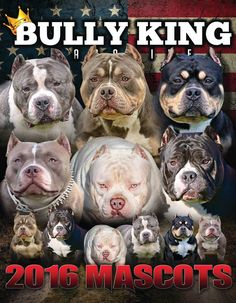 One Year Subscription | 6 Issues Arriving Every Other Month The #1 American Bully Magazine | News, Articles & Features on the Best Bullies on the Planet! For Subscribers: Issues arrive towards the end