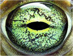 Ojos de animales (Imágenes) HD