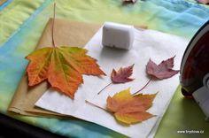 Voskování listu - vydrzi tak dlouho neseschnuté v dekoracích