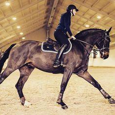 #equestrianperformance