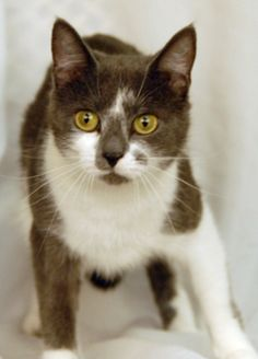 Mildred ADOPTED