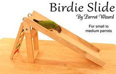 Training Your Pet Parrot Cockatiel Toys, Parakeet Toys, Budgies, Diy Parrot Toys, Diy Bird Toys, Homemade Bird Toys, Diy Bird Cage, Crazy Bird, Animal Room