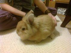 Moj zajačíík Elliška :))