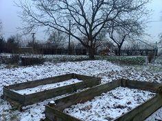 Vyvýšené kompostovací záhony průběžně plním starou slámou, štěpkou, pilinama, vytrhaným plevelem a na podzim také listím. V zimě je kropím močí; přes sezónu v nich pěstuju. Výborně se zde daří bramborám a dýním.
