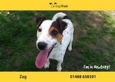 Zag at Dogs Trust Newbury loves to be the centre of attention, and likes being very busy.