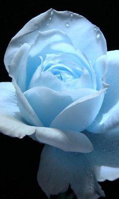Love the soft blue