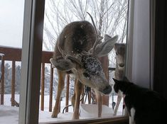 Deer Asking Cat To Go Inside | Bored Panda