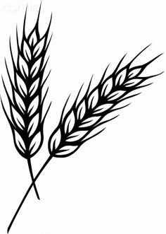 Drawings of Wheat Stalks | black and white drawing of two stalks of wheat