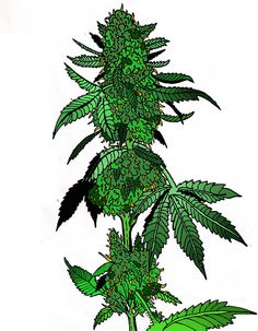 Graffiti Weed Drawings | Marijuana-drawing-2.0 on Flickr.