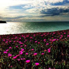 La bendita primavera. Playa de Los Locos. Suances. Catabria. España. Spain. © Laura Junquera