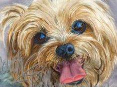 Clancy is an Open Edition Giclee Art Print from a watercolor featuring a Yorkshire Terrier dog enjoying his masters lap. One thing is for certain, Clancy is a morning dog. He is the first one up and waits impatiently for his morning walk. It's his chance to get out and meet the neighbors and take in the sights, even if its the same route as yesterday. The more attention Clancy gets, the better! His personality is friendly, energetic and intelligent, which is typical of the breed. This Yorki…