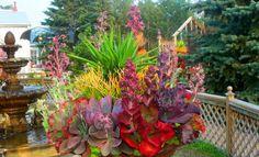 Wowee! What a gorgeous succulent arrangement!