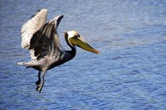 Birders will love Ding Darling Wildlife Refuge where you can spot brown pelicans and more.