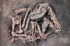 The remains of a Stone Age-era dog and his master were found buried together at an excavation site in Sweden, with clear photos now showing the ancient canine bones, reports said.The dog, believed to …