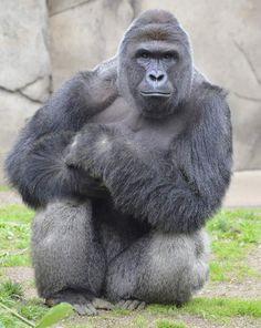 Harambe Gorilla Killing: Michelle Gregg and Deonne Dickerson Could Face Child Neglect Charges - Cincinnati Police Investigate