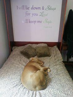 GOD loves pitbulls too!