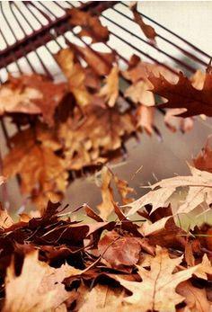 November   raking the leaves ♡
