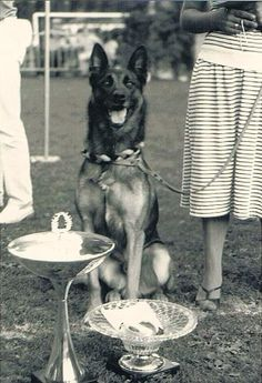 ★★★★ Anjing Belgian Malinois Dog Lovers K9 Police Club ★★★★   Kaskus - The Largest Indonesian Community