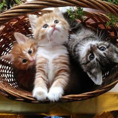 I jsut wanta basket of kitties to appear on the foot of my door.... sigh i wish!