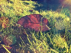 Dried leaf in grass by lefleurpixie, via Flickr