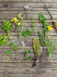 Wildkräuter aus dem Garten oder am Wegesrand gepflückt, frisch oder getrocknet, verleihen jedem Gericht das gewisse etwas- #cestbon