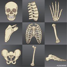 Vektör: Human Bones Pack Vector.