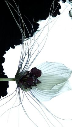 Garden Book - Botanical artist Makoto Azuma has long been trying bonsai to look for . Flowers Perennials, Planting Flowers, Flower Gardening, Azuma Makoto, Black White Art, Photosynthesis, Editorial, Art For Art Sake, Japanese Artists