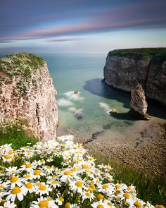 Flamborough, Yorkshire / loving the wild daisies in the foreground