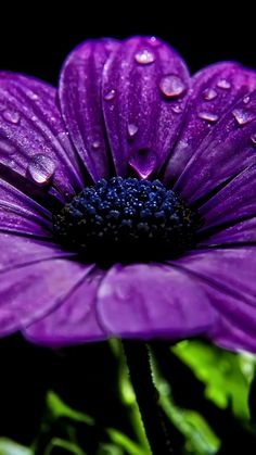 flower, night, drops, dew, close-up