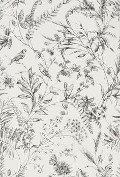 Fern Toile by Ralph Lauren - Etched Black - Wallpaper : Wallpaper Direct