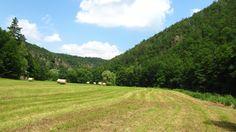 Meadow next to Jihlava river, Czech republic