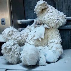Bears living on the streets. Heartbreaking.
